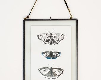 Butterfly print, A4, Limited edition art work, illustration