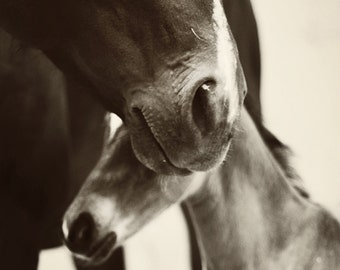 "Mare and foal black and white photographic print, ""Mother's Embrace"""