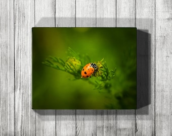Ladybug, Ladybug Art, Ladybug Print, Ladybug Canvas, Red Art, Greenery, Nature Photography, Nature Art, Metal Wall Art, Canvas Wall Art