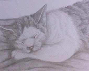 Pet cat portraits