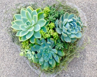 SUCCLENT PLANTER with SUCCULENTS, Mother's Day Gift, Birthday, Sympathy, Get Well, Wedding Shower, Succulent Centerpiece