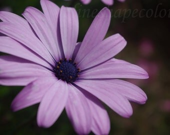 Pretty purple flower - Nature photography print