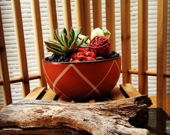 Soft Talking Plant/succulent /asian planter/ gift/graceful setting for window, patio or bright lite setting