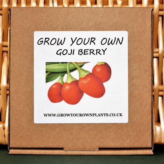 goji berry growing instructions