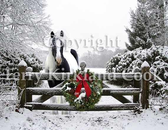 Gypsy Horse Christmas 2015 ~  Copyrighted Photograph by Terry Kirkland Cook