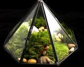 Geometric Terrarium-Modern Terrarium-Diamond Terrarium-Moss Terrarium-TerraSphere