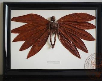 Frame Mounted Desicated Woodland Fairy.
