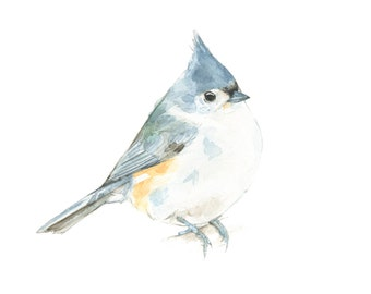 Tufted Titmouse watercolor painting - bird watercolor painting - 5x7 inch print - 0008