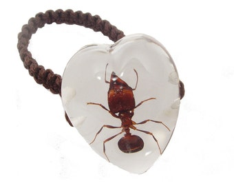Resin Ring Real Ant