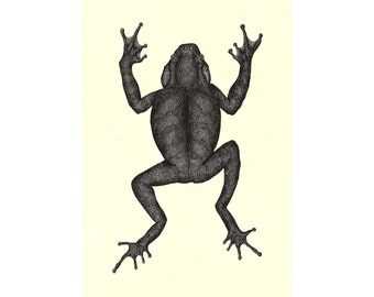 "Frog illustration // Postcard sized - A6, 4.1"" x 5.8"""