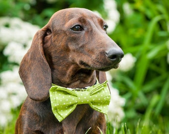 Bow Tie Collar - Removable Bow Tie - Dog collar - Dog clothing - Dog accessories