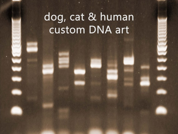 personalized dna artwork sepia biology science gifts by