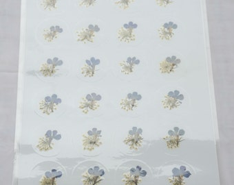 """Blue Lobelia and White Laceflower 1"""" Real Pressed Flower Decorating Stickers - pack of 24   yhs004"""