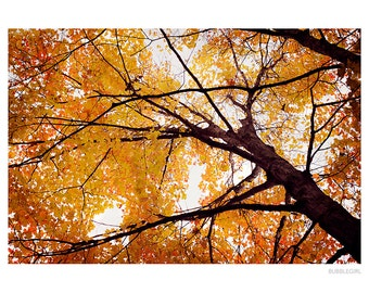 Nature Photography PRINT, Fall Colors in the Woods, Wall Art