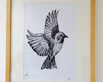 Bird illustration LIMITED EDITION art print A4 size