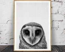 Owl Print, Woodlands Nursery Decor, Wilderness Wall Art, Printable Owl Poster, Black White and Grey, Animal Photo, Gender Neutral Kids Room