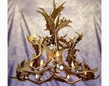 Real Antler Colorado Fallow Deer Chandelier Light, Rustic