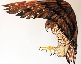 My Hawk Watercolor Fine Art Print