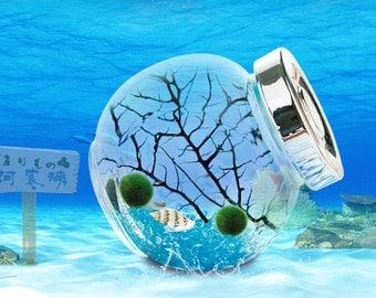 Marimo Pet Aquarium Kit/2 Marimo Nano Moss Ball/Sea Fan/Tiny Seashells/Glass Jar With Lid-Gifts For Girlfriend,Office Desk Decoration