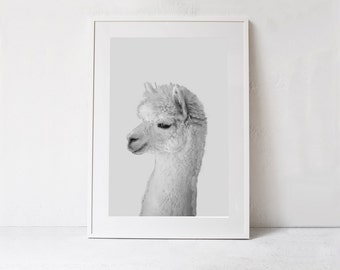 Alpaca Poster-Nursery Animal Print-DIGITAL DOWNLOAD-Alpaca Printable Wall Art-Kids Room Decor-Kids Print-Nursery Print-Nursery Poster Print