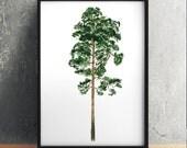 Pine tree art Tree print Watercolor print Pine poster ACW926