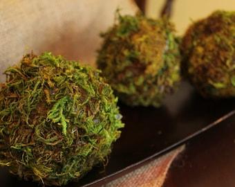 Moss Balls, Set of 3