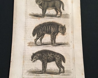 1823 Original Copperplate Engraving of Cats by Oliver Goldsmith, Antique Print - Wild Cats