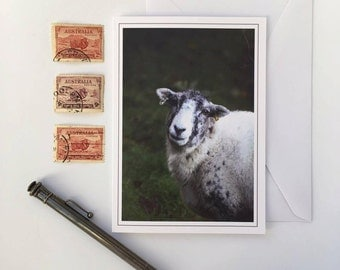 Greeting Card - Looking Sheepish 2