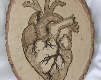 Vintage anatomical heart
