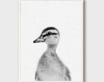 Nursery Print, Duck Print, Duck Wall Art, Baby Duck Nursery, Black and White, Animal Print, Printable Art, Nursery Wall Art, Grey Decoration
