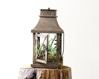 succulent lantern
