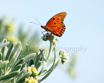 gulf fritillary butterfly butterfly photography insect photography nature photography wildlife photography butterfly decor spring decor