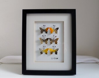 3D Butterfly Framed Art (Grey & Yellow)