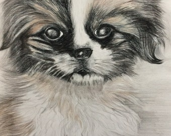 Cute Puppy - example of a coloured pencil sketch.