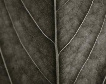 Nature Series Print