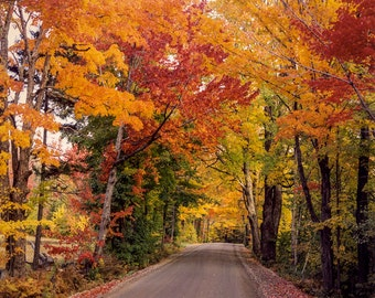 Autumn Trees, Fall Colors, New England, Autumn Color, Brilliant Color Road, New England Travel, Large Wall Art, Wall Decor