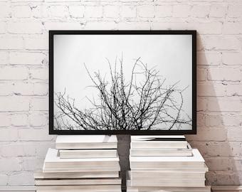 Branches II /fine art photography,Bare Branches, Nature,Fine Art Photography, Winter, Tree, Silhouette, Minimualist Art