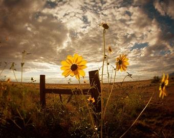 Sunflower Photograph - Yellow Flower Photography - Sunflower Decor - Sunflower Wall Art - Flower Photograph - Prairie Photography