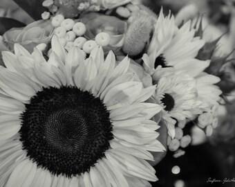 Aluminum Print Wall Art - Sunflowers