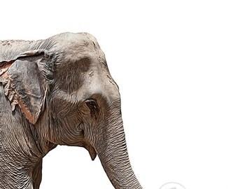 Printable Wall Art, Elephant #1, Animal Nursery Prints, Safari Animal Prints, 8x10, elephant decor, elephant print, elephant printable
