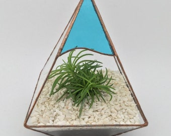 Delightful coloured handmade glass terrarium planter cacti / air plants / plants