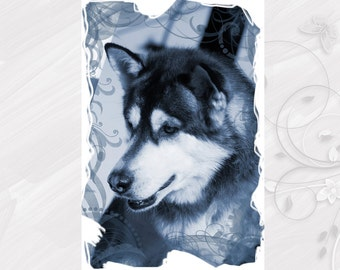 "Post card greeting card ""Alaskan Malamute"" dog - [# GK. 2012.028]"