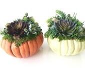 Fall Pumpkin Succulent Arrangement, Artificial Succulent on Small Resen Acrylic Pumpkin Centerpiece Fall Rustic Décor