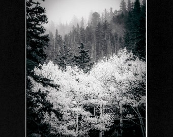 Photo in Flagstaff Arizona