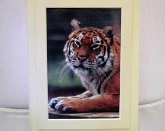 Tiger Framed Notecard with Envelope