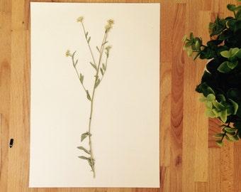 Herbarium 18