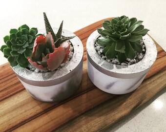 Marbled Concrete Pot and Succulent