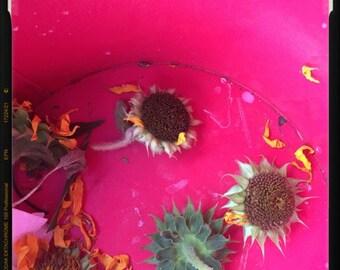 The Pink Sunflower Bin