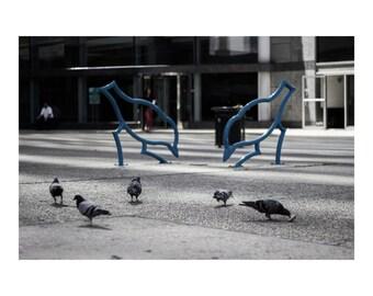 Birds & the Bees 8x10
