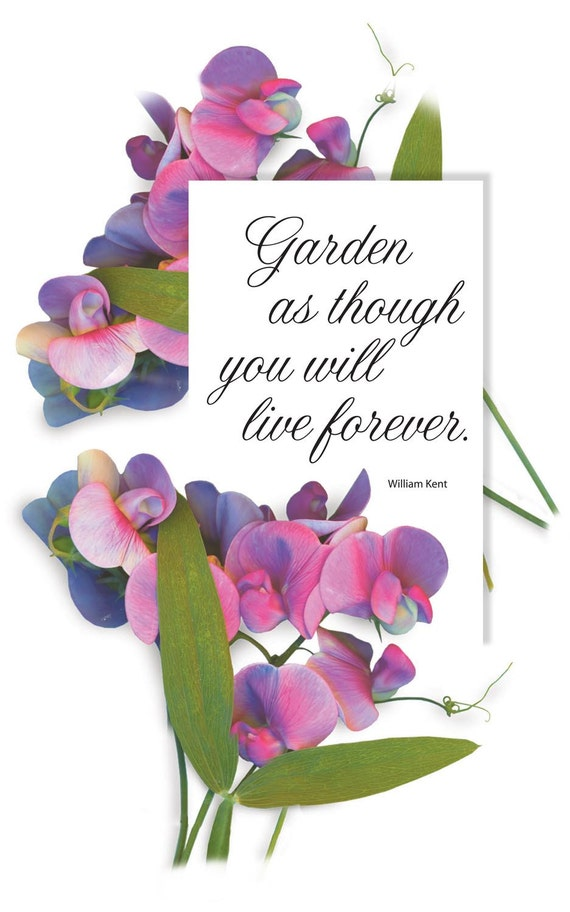 Sweet Peas digital download print. Typography quote for gardeners and flower lovers. Flowers from the garden. One PDF and one JPG.